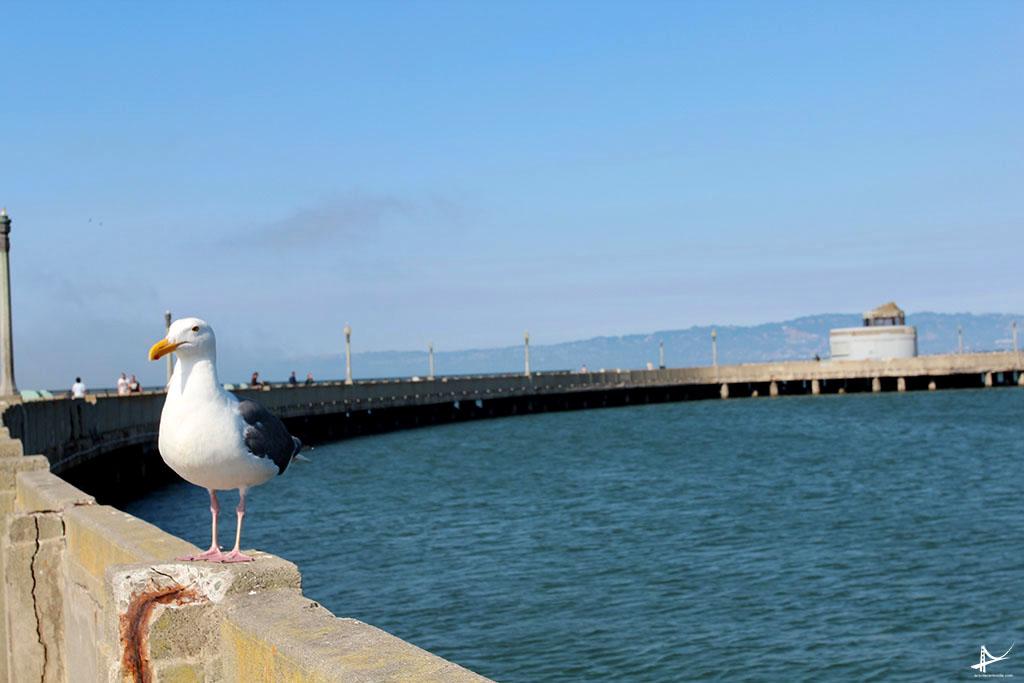 Pier Municipal de San Francisco