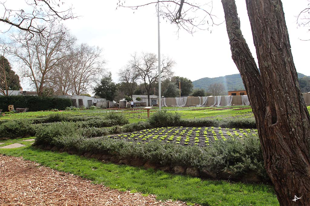 Horta do chefe Thomas Keller em Youthville