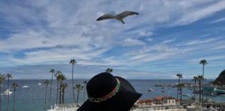 The Avalon Hotel em Catalina Island