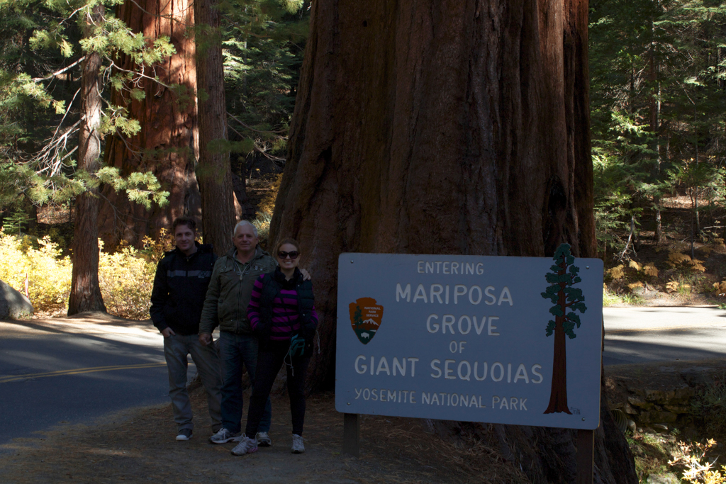 Mariposa Grove - as sequoias gigantes do Yosemite National Park