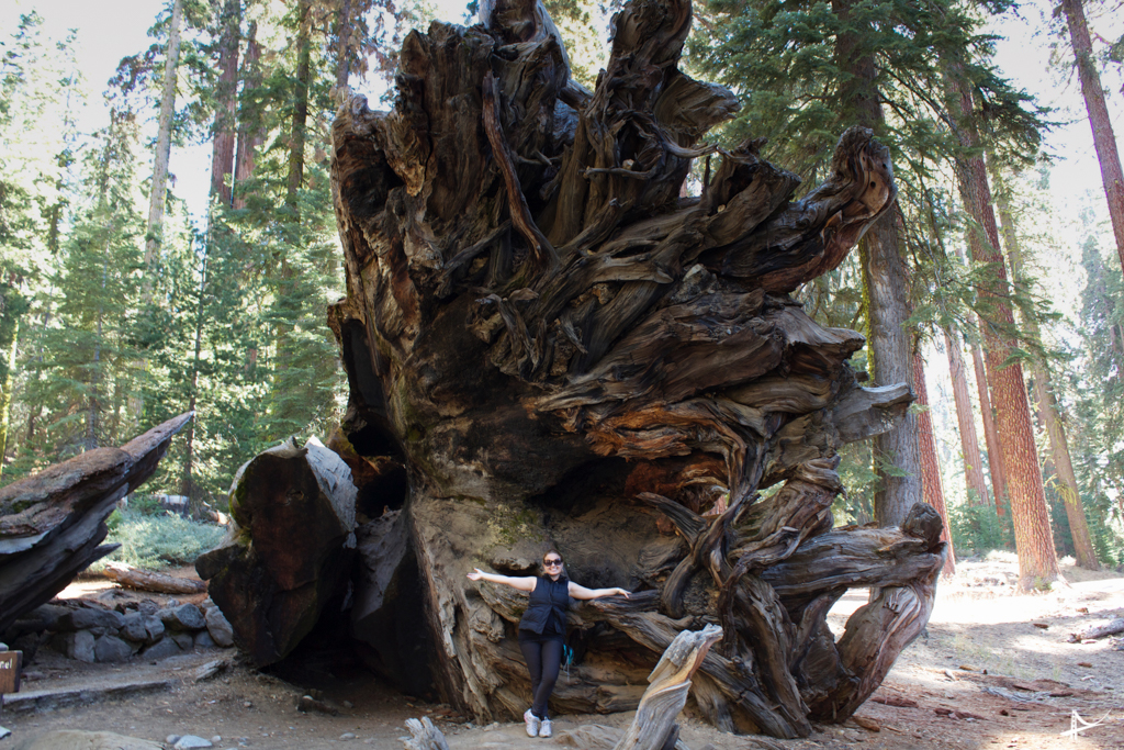 Mariposa Grove no Yosemite