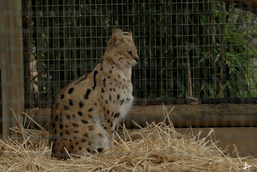 Chita no West Safari