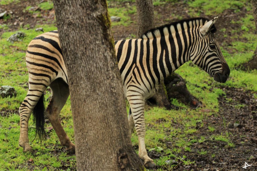 Safari West em Sonoma