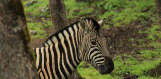 West Safari em Sonoma