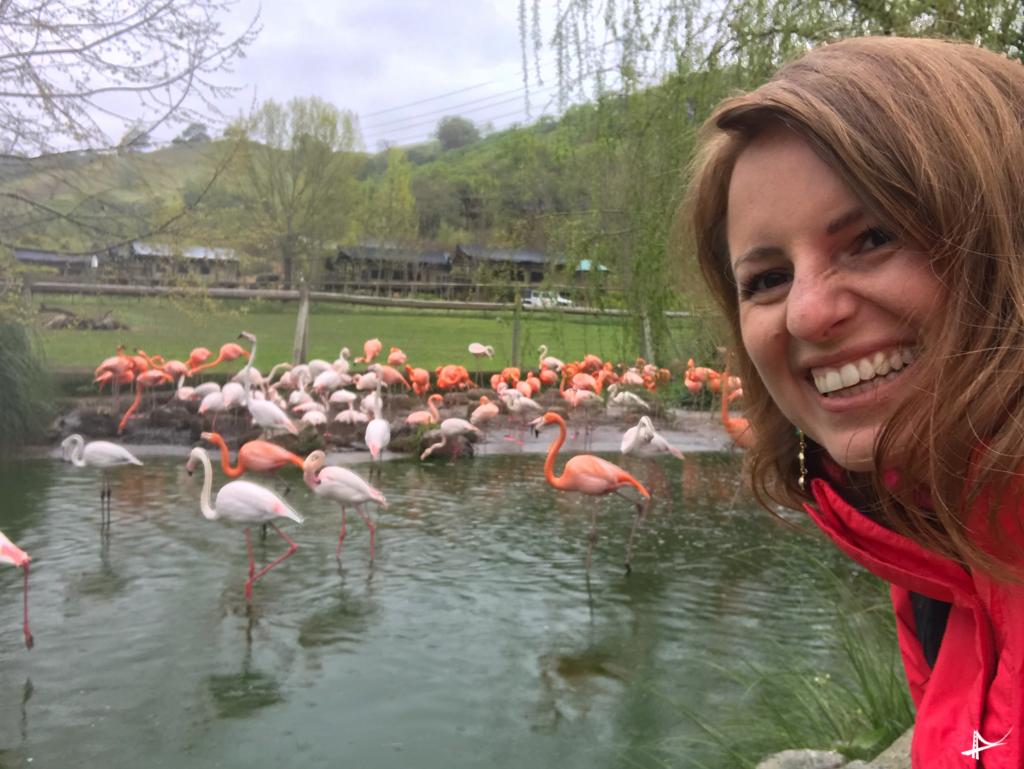 Flamingos em Sonoma