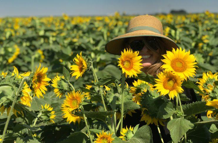 Campos de girassóis em Dixon na Califórnia