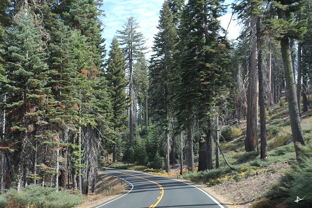 Estrada Tioga Pass